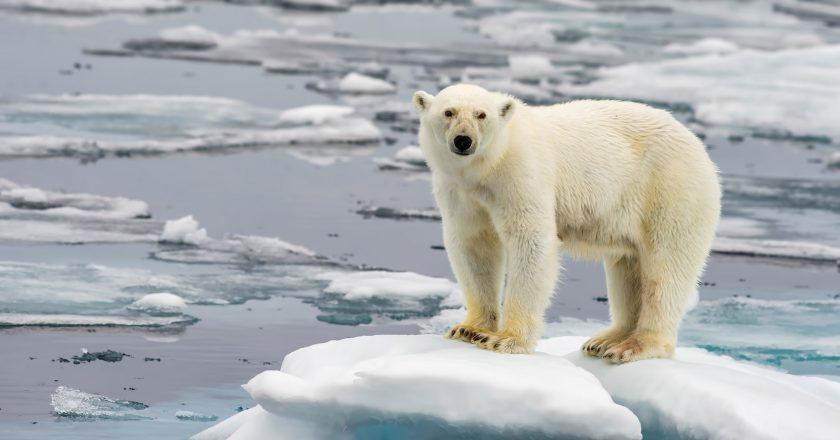 Arctic Temperature Rise