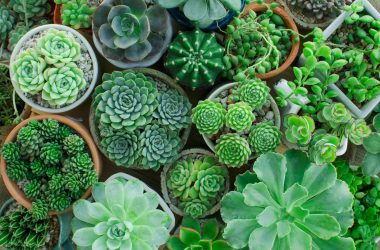 5 Reasons to Have Houseplants in Your Dorm Room