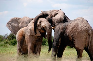 Humans-have-Caused-Wildlife-Populations-to-Decline-by-60-Percent