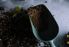 tips for indoor gardening during isolation